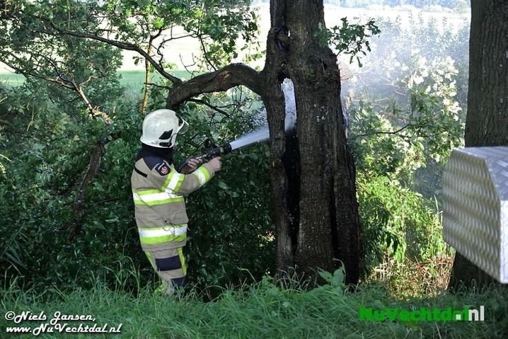 Video: Boom in brand op de Stokte te Dalfsen - Foto: Niels Jansen