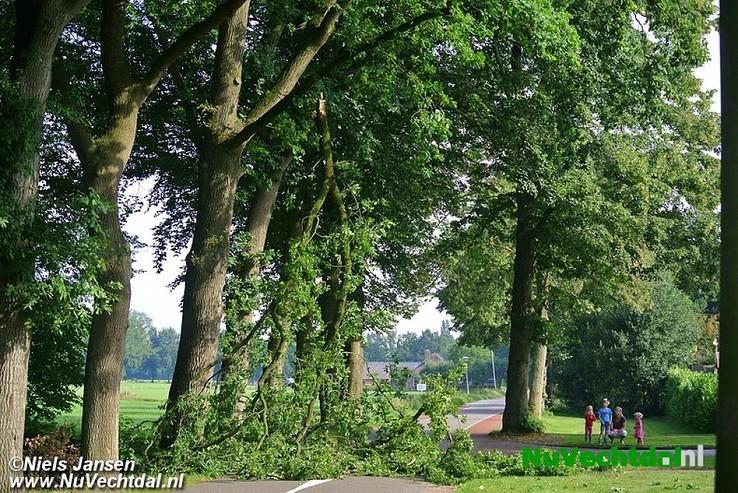 Grote tak knapt spontaan uit boom Leemculeweg Dalfsen - Foto: Niels Jansen