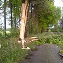 Blikseminslag Hagenweg Dalfsen vernietigd boom