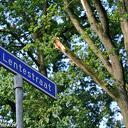 Grote tak knapt spontaan uit boom Leemculeweg Dalfsen